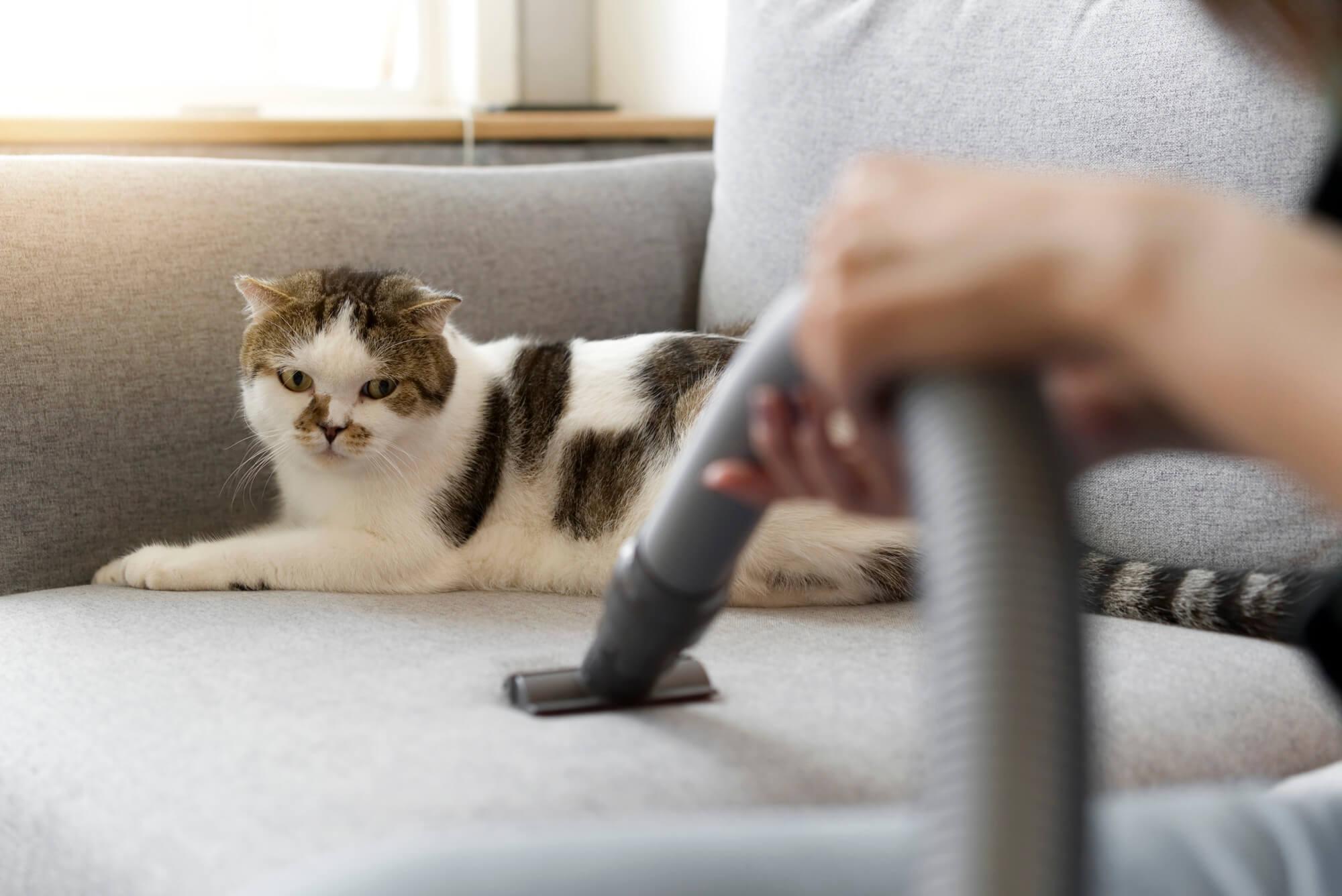 Jak wyprać, wyczyścić kanapę domowym sposobem?